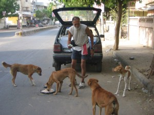 Amrish dada with dogs